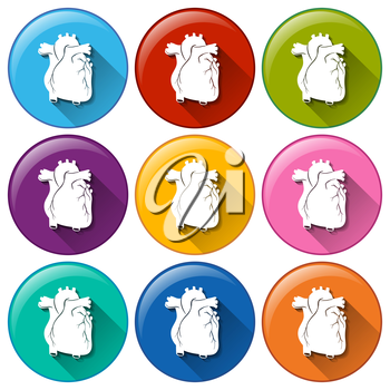 Buttons with heart organs on a white background