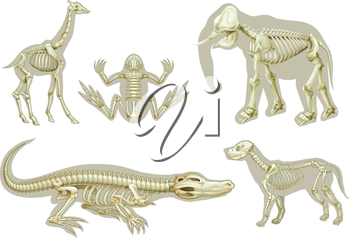 Illustration of the skeletons of animals on a white background