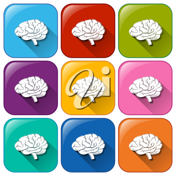 Illustration of the buttons with brain organ on a white background