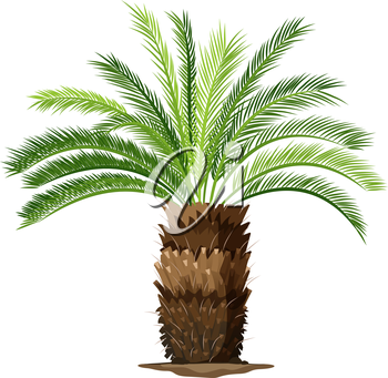 Illustration of a a topview of a sago palm plant on a white background