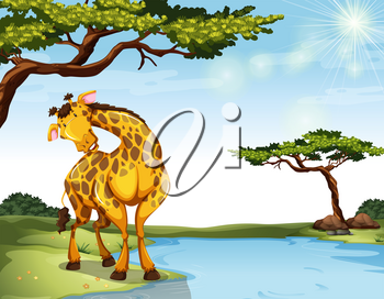 Giraffe standinf at the river bank