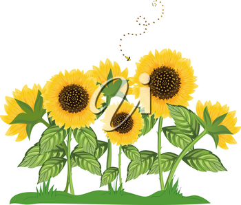 Clip Art Illustration of a Bee Flying Around Sunflowers