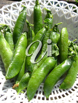 Fresh green pods of peas lay in a plate