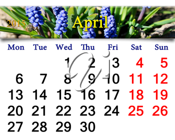 calendar for May of 2015 year with ribbon of blooming muscari