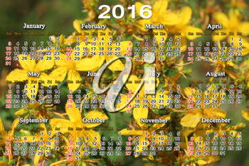 office calendar for 2016 on the yellow flowers of St.-John's wort background