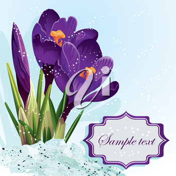 Royalty Free Clipart Image of a Purple Crocus Background