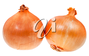 two common onion bulbs isolated on white background