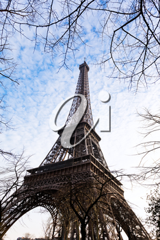 eiffel tower and tree branches in Paris in spring