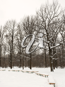 snow covered benches on glade of urban park in winter