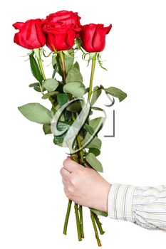 male hand giving bouquet of five red roses isolated on white background