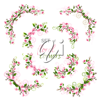 Cherry pink blossoms and leaves on tree branches. Hand-drawn flourishes. Isolated on white background.