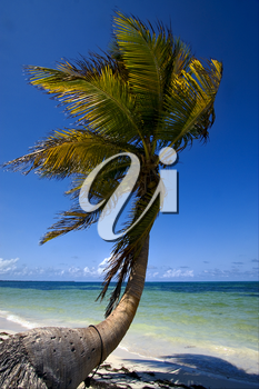 palm in the wind in the blue lagoon mexico sian kaan