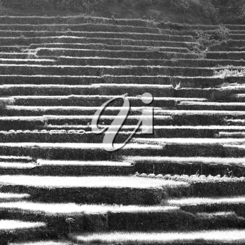 in  philippines  terrace field for coultivation of rice  from banaue unesco site