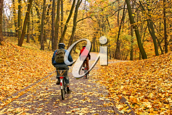 Bicyclists ride on a paving alley in park covered with yellow autumn leaves