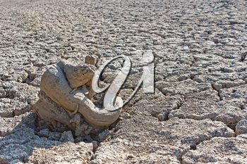Some dry tree root on the dried and cracked lake surface