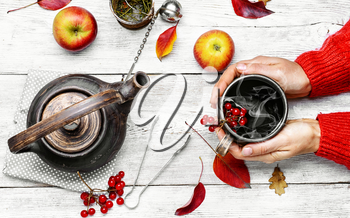 Hot cup of autumn tea with berries in his hands.Still life with kettle,berries and apple