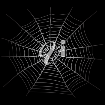 Spider web and spider in the dark. White cobweb on black background