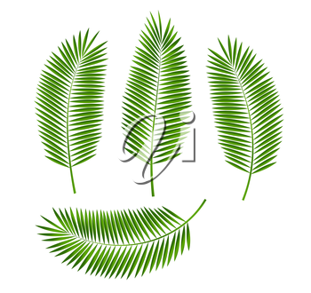 Palm Leaf Isolated on White Background. Vector Illustration EPS10