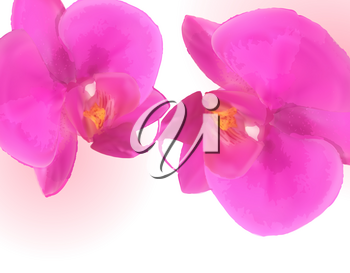 Naturalistic Beautiful Colorful Pink Orchid.Vector Illustration. EPS10