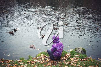 Little girl feeds ducks on lake in autumn park