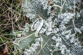 Fresh frost on green grass leaves, macro photo with selective focus