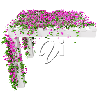 Bougainvillea with pink flowers. 3D graphic isolated object on white background