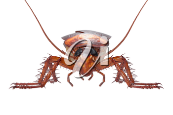 Cockroach bug insect roach creepy and revolting, front view. 3D rendering