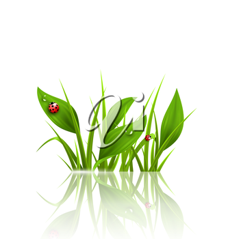 Green grass, plantain and ladybugs with reflection on white. Floral nature spring background