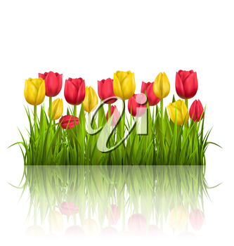 Green grass lawn with yellow and red tulips and reflection on white. Floral nature flower background