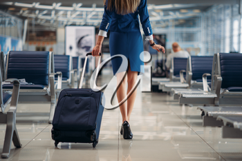 Air hostess with suitcase going between seat rows in airport. Stewardess with baggage, flight attendant with hand luggage, aviatransportations job