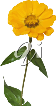 Flower Zinnia Low Poly Isolated on White Background. Vector