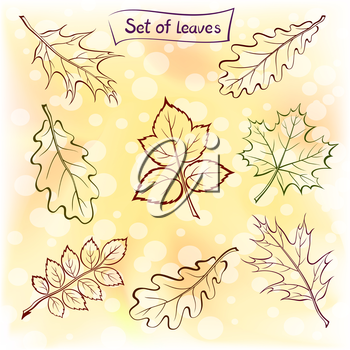 Set of Pictograms Plant Leaves, Oak, Iberian Oak, Maple, Raspberry, Dogrose. Nature Yellow and Orange Autumn Background. Eps10, Contains Transparencies. Vector