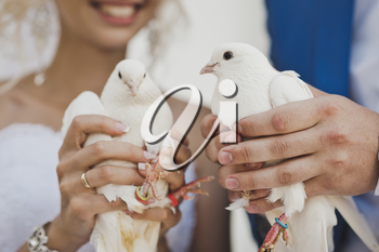 Two white pigeon in the hands of the newlyweds.