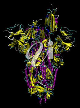 3D structure of the 2019-nCoV novel coronavirus spike protein, a potential target for vaccine and therapeutics against Covid-19. PDB 6VSB
