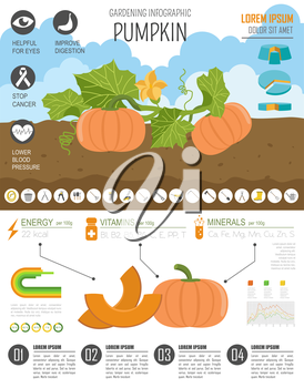 Gardening work, farming infographic. Pumpkin. Graphic template. Flat style design. Vector illustration
