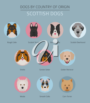 Dogs by country of origin. Scottish dog breeds. Infographic template. Vector illustration