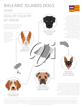 Dogs by country of origin. Spain. Balearic islands dog breeds. Infographic template. Vector illustration