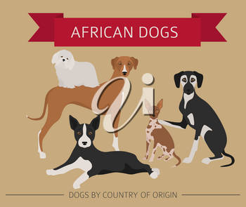 Dogs by country of origin. African dog breeds. Infographic template. Vector illustration