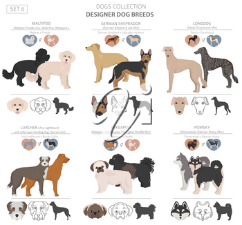 Designer dogs, crossbreed, hybrid mix pooches collection isolated on white. Flat style clipart set. Vector illustration