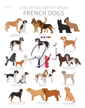 Dogs by country of origin. French dog breeds. Shepherds, hunting, herding, toy, working and service dogs  set.  Vector illustration