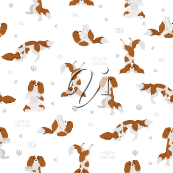 Yoga dogs poses and exercises. Cavalier King Charles spaniel seamless pattern. Vector illustration