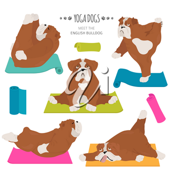 Yoga dogs poses and exercises. English bulldog clipart. Vector illustration