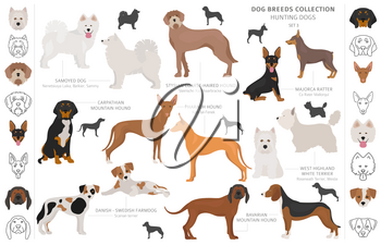 Hunting dogs collection isolated on white clipart. Flat style. Different color, portraits and silhouettes. Vector illustration
