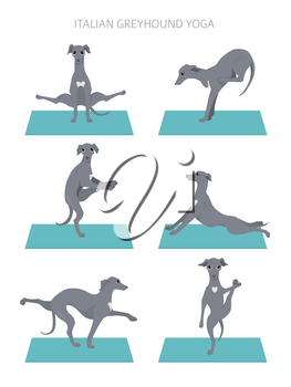 Yoga dogs poses and exercises poster design. Italian greyhound clipart. Vector illustration