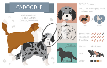 Designer dogs, crossbreed, hybrid mix pooches collection isolated on white. Cadoodle flat style clipart infographic. Vector illustration