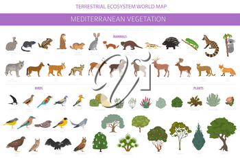 Mediterranean vegetation biome, natural region infographic. Terrestrial ecosystem world map. Animals, birds and vegetations design set. Vector illustration