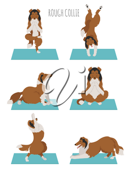 Yoga dogs poses and exercises. Rough collie clipart. Vector illustration