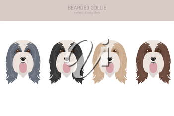 Bearded collie clipart. Different coat colors and poses set.  Vector illustration