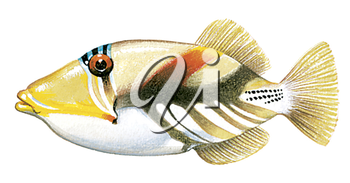 Royalty Free Clipart Image of a Picasso Fish