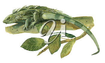 Royalty Free Clipart Image of a Iguana